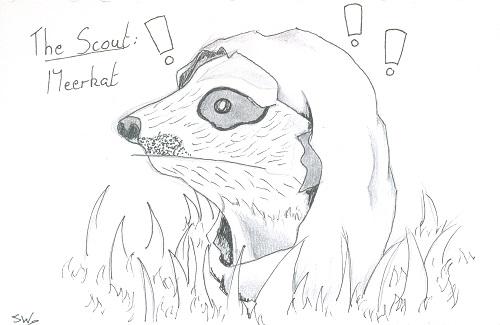 Scout- Meerkat